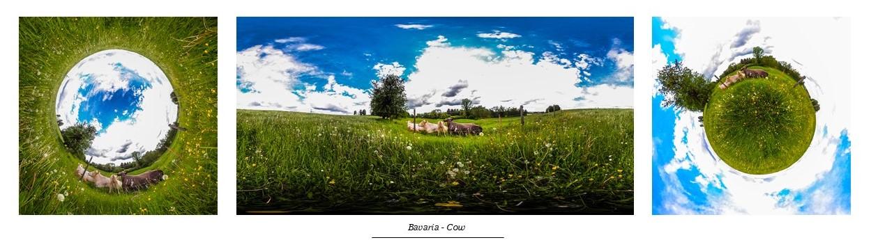 Bavaria - Cow