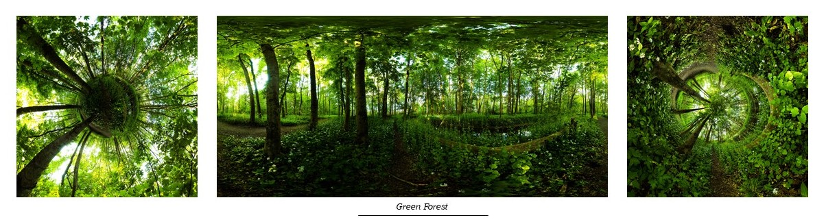 Green Forest-2020
